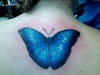 butterfly-tattoo-1