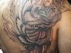 tatuaggi-phoenix-18