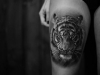 tigre-4