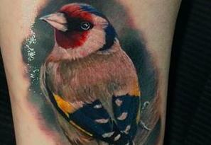 cardellino tatuaggio