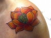 lotus flower-15