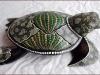 tartaruga_maori_7_20120211_1250641177