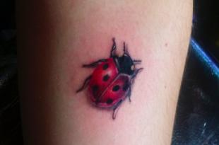 coccinella tattoo